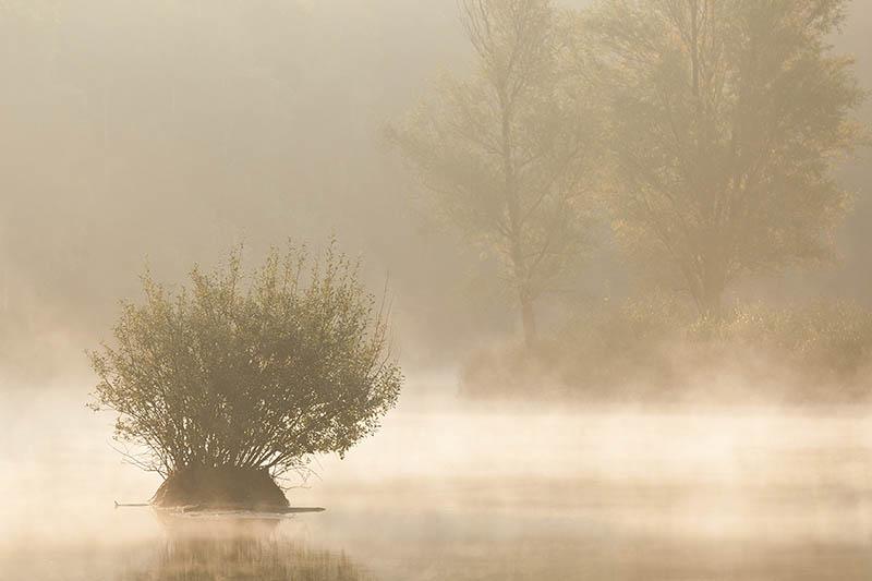 Ven met mist.