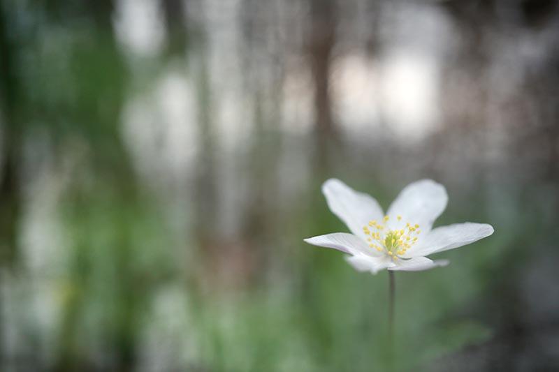 Spelen met bloemen en water in de achtergrond.
