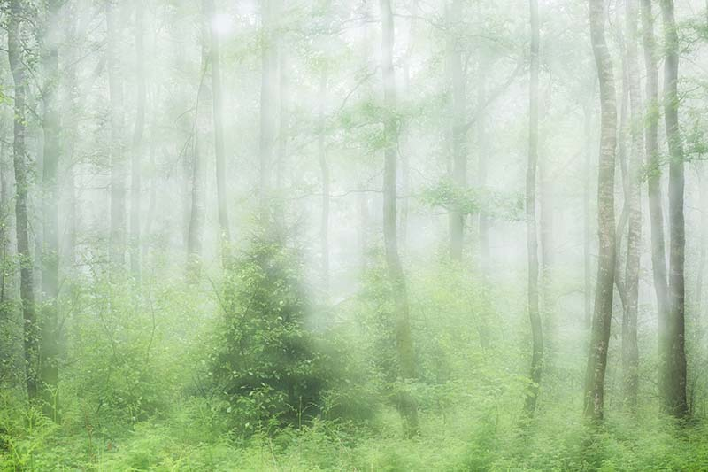 Mist in de Viroin.