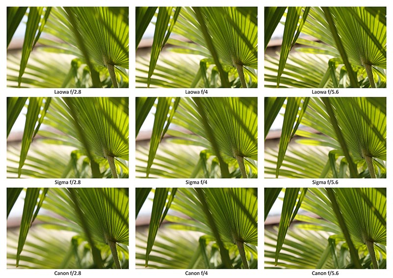 Een tweede vergelijk van de LAOWA met Sigma en Canon (klik op de foto voor een hoge resolutieversie).