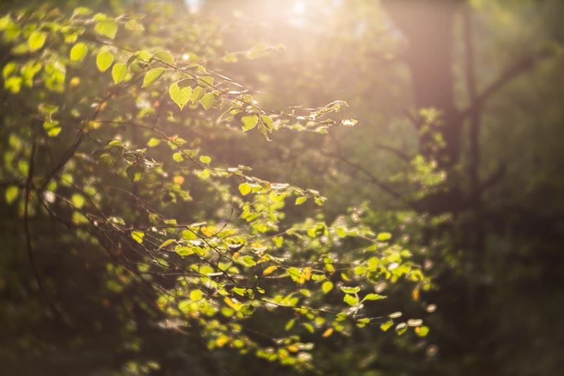 Dromerige sfeer in het bos.