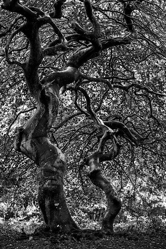 Bizar gevormde bomen.