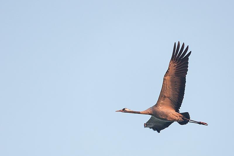 Sommige komen mooi dichtbij langs vliegen.