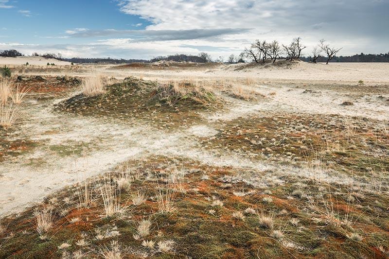 Februari: in de winter bezoek ik altijd graag gebieden die iets met winter / ijstijd van doen hebben, zoals stuifzandgebieden. Wie denkt dat de winter kleurloos is, moet zeker in de winter eens met zijn neus tussen de mossen gaan zitten!