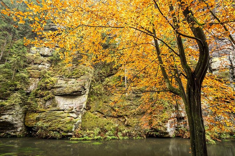 Oktober: deze periode reis ik heel wat af om de herfst in volle glorie mee te maken om de twee reisbestemmingen die ik in 2017 met Nordic Vision aanbiedt. In de Sächsische Schweiz staan de herfstkleuren in het bizarre landschap centraal. Anderhalve week later is Rügen aan de beurt. Hier start de zoektocht naar mooie plekjes voor overvliegende kranvogels die hier met tienduizenden neerstrijken.