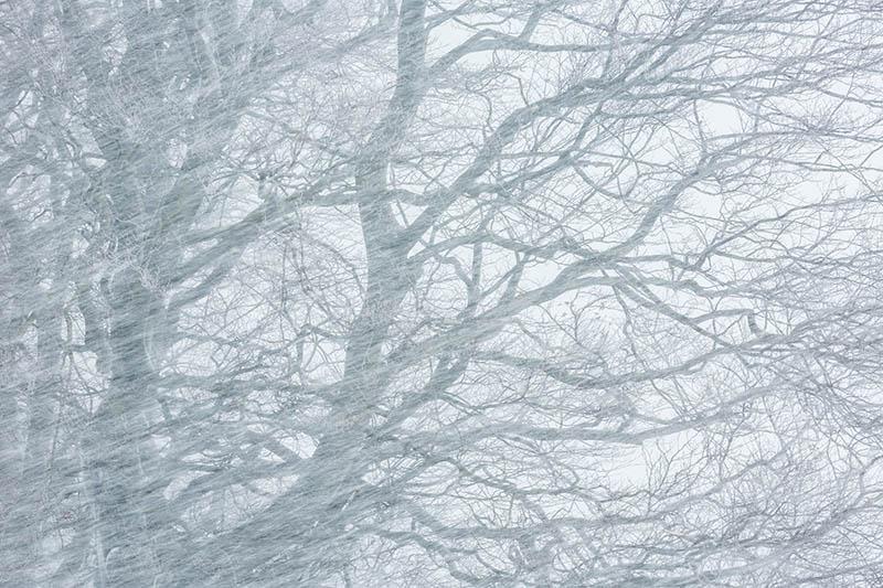 Sneeuwstorm!