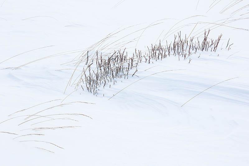 Vooruit, nog een detail: slechts wat stengeltjes en patronen veroorzaakt door de wind.